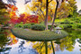 A Burst Of Fall Color Mural Wallpaper