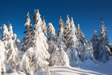 Snow Covered Trees In The Mountains Wall Mural