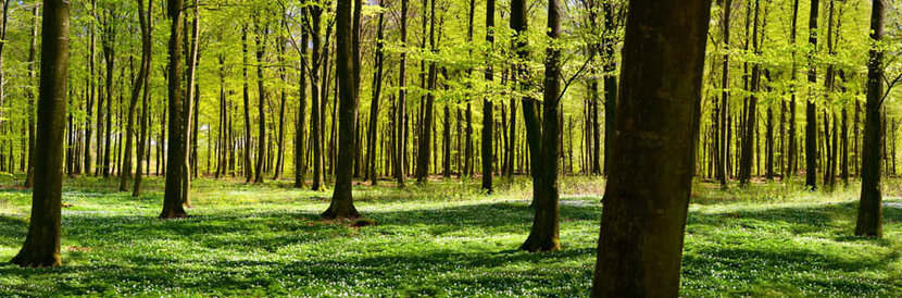 A Green Forest In Spring Wall Mural