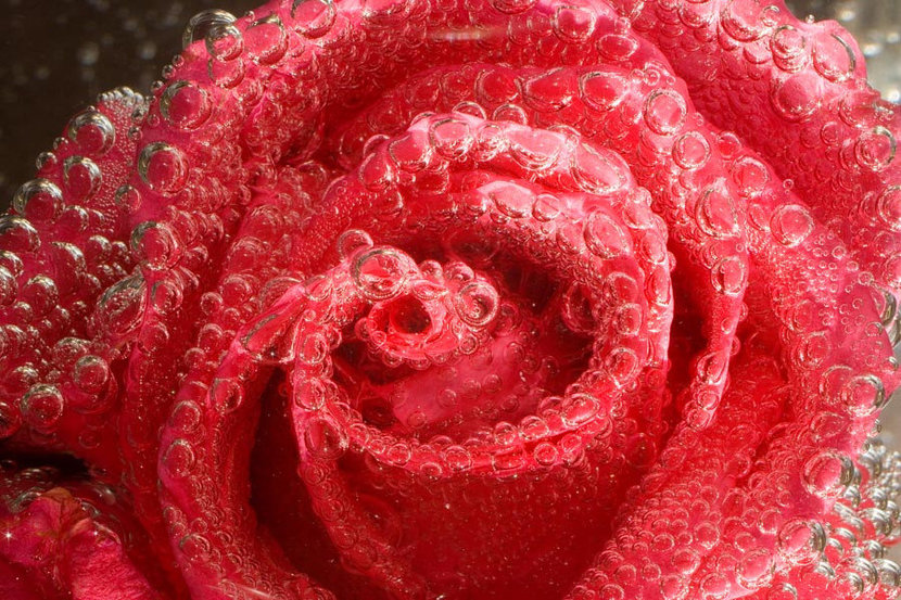 A Rose in Bubbles  Mural Wallpaper