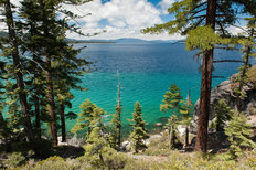 Pine Trees At Lake Tahoe Mural Wallpaper