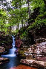 Adam's Falls and Tall Trees Mural Wallpaper