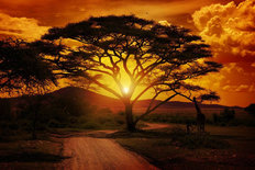 Africa Sunset Wallpaper Mural