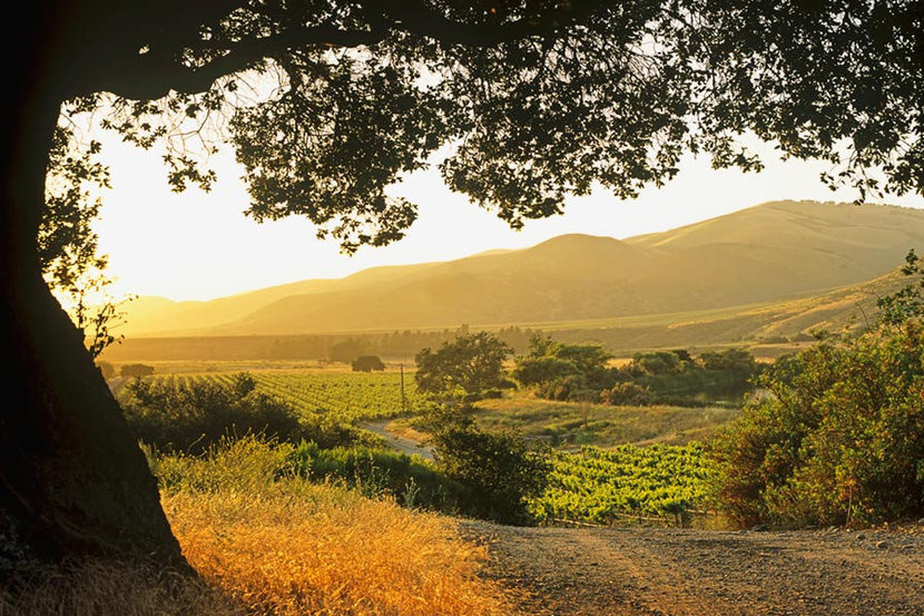 Afternoon In The Santa Maria Valley Wallpaper Mural