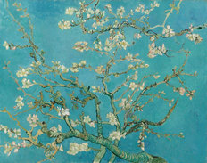 Almond Branches in Bloom Wall Mural