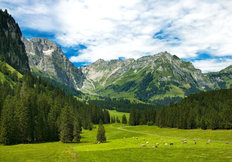 Alpine Meadow Wallpaper Mural