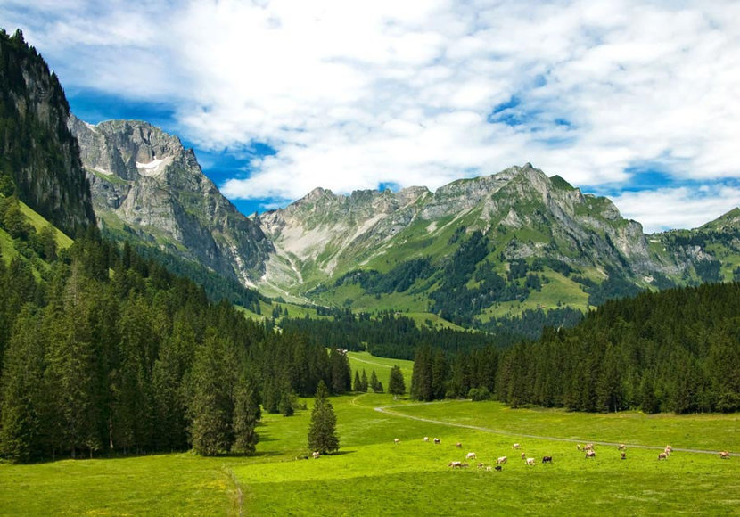 Alpine Meadow features a picturesque view of a green field with pine tree forests and a mountain backdrop