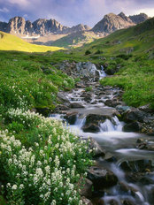American Basin With White Flowers Mural Wallpaper