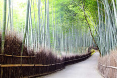 Arashiyama Bamboo Trails, Japan Wall Mural