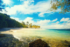Tropical Summer Beach Mural Wallpaper