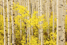 Autumn Color, Wasatch Mountains 1 Mural Wallpaper