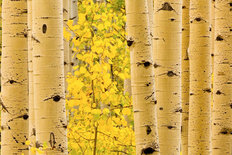 Autumn Color, Wasatch Mountains 3 Wall Mural