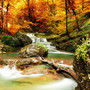 Autumn Creek Woods With Yellow Trees Mural Wallpaper