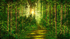 Spring Green Forest Wallpaper Mural