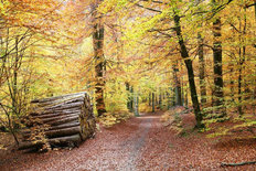 Bright Autumn Forest Walk Wall Mural