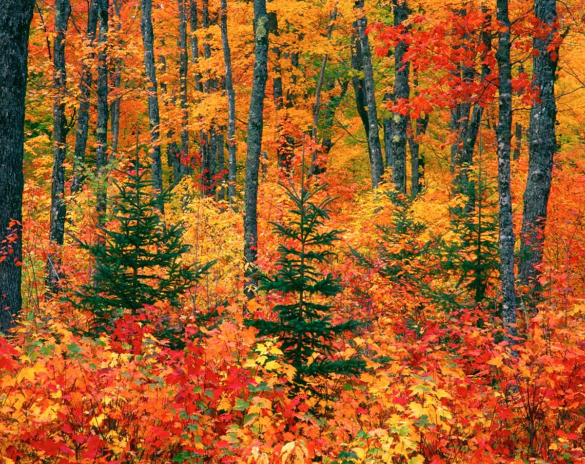 Autumn in the Upper Peninsula, Michigan Mural Wallpaper