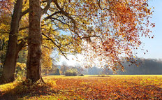 Sunny Autumn Landscape Wallpaper Mural