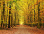 Autumn Pathway Wall Mural