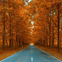 Autumnal Alley Wall Mural