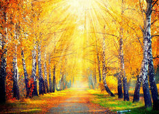 Autumnal Rays Wallpaper Mural
