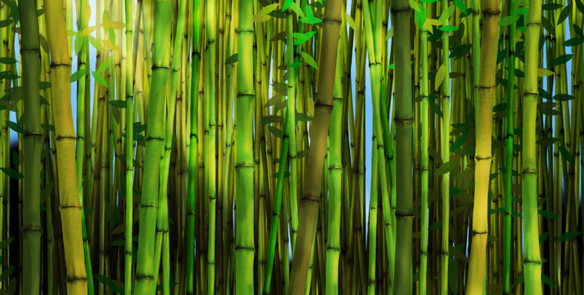 green-bamboo-trees-in-forest-mural-wallpaper