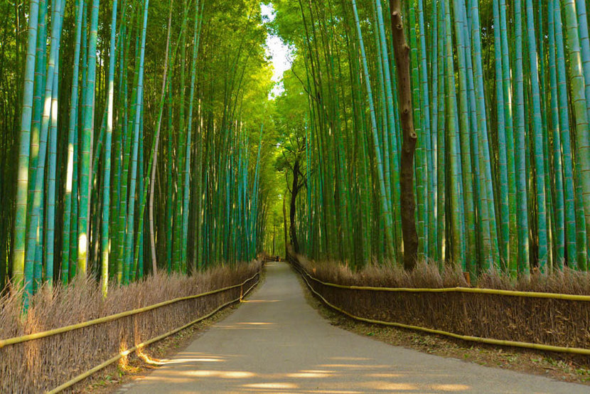 Bamboo Forest Trail Wallpaper Mural