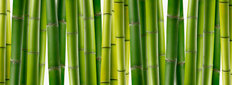 Bamboo-Panoramic Wallpaper Mural
