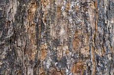 Bark Wood Texture Mural Wallpaper