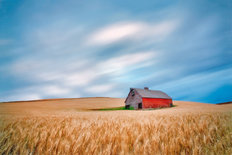 Barn In Wheat Field Wall Mural