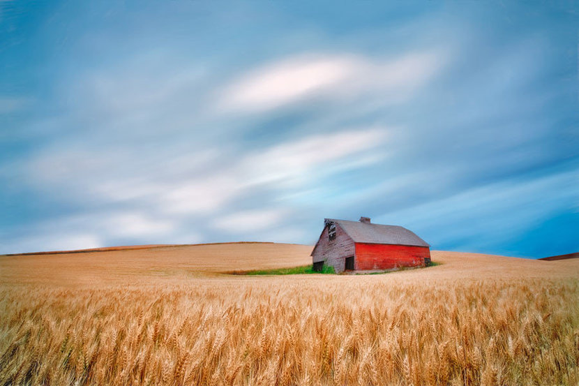 Barn in wheat field with approaching storm clouds