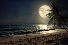 Beach Lit By Full Moon Wall Mural
