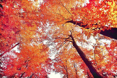 Autumn Forest Branches Mural Wallpaper