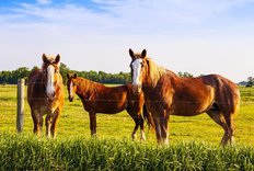Beautiful Horses Standing In A Field Mural Wallpaper