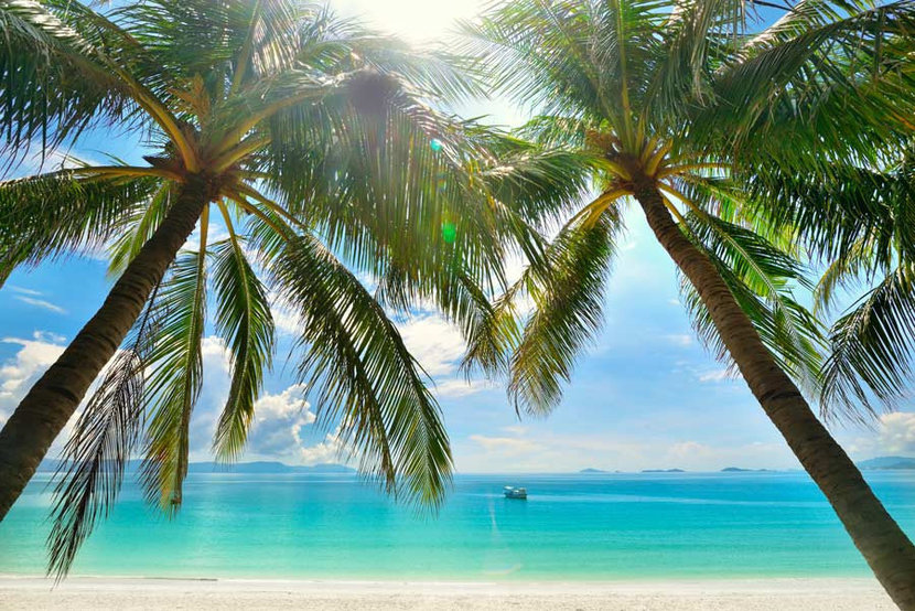 Sunny Palm Trees Mural Wallpaper