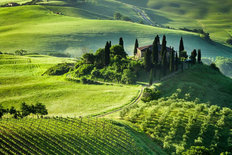 Early Morning Italian Villa And Vineyard Wall Mural