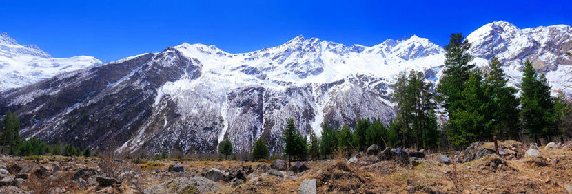 beautiful view of mountains in the Elbrus area, with pine trees in the foreground