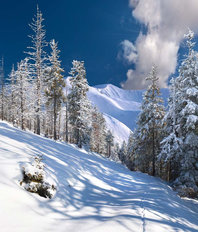 Beautiful Winter Landscape In The Mountains Wall Mural