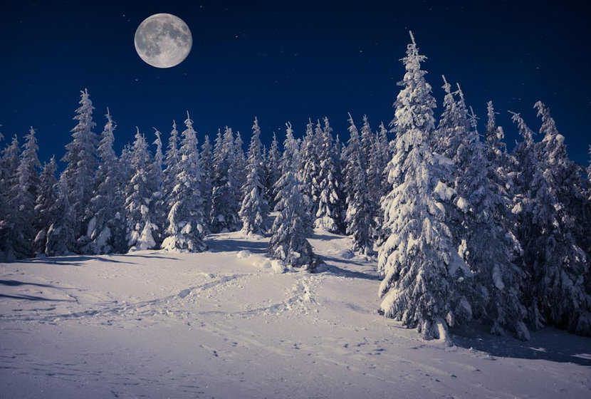 The Winter Moon Wall Mural