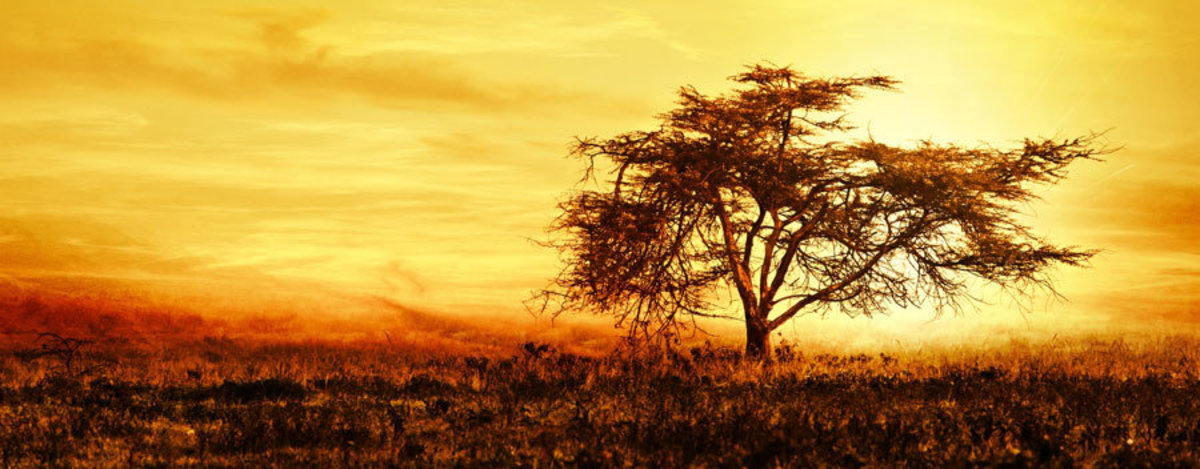 Lone African Tree Wall Mural