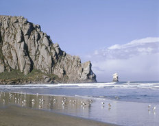 Birds On Beach At Morro Rock Wall Mural
