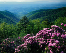 Blue Ridge Mountains Wall Mural
