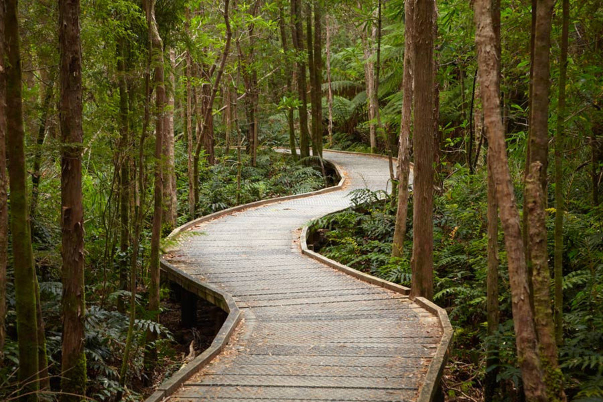Boardwalk To Nelson Falls, Tasmania, Australia Wallpaper Mural