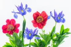 Boquet Of Iris And Peony Flowers Wall Mural