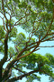 Branches And Leaves Of Trees Mural Wallpaper
