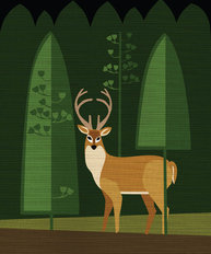 Buck in The Woods Wall Mural
