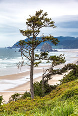 Cannon Beach Tree Mural Wallpaper