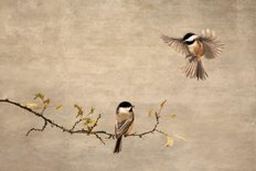 Chickadee Encounter II Wall Mural