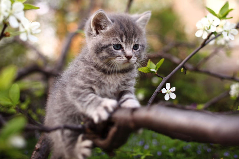 Little kitten finds adventure climbing the branches of a flowering tree