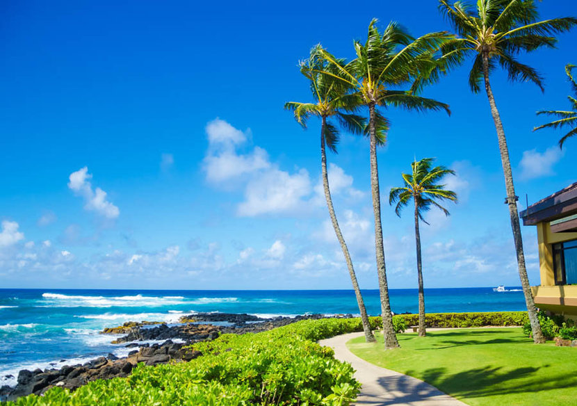 Coconut palm trees swaying in the wind on a beach in Hawaii