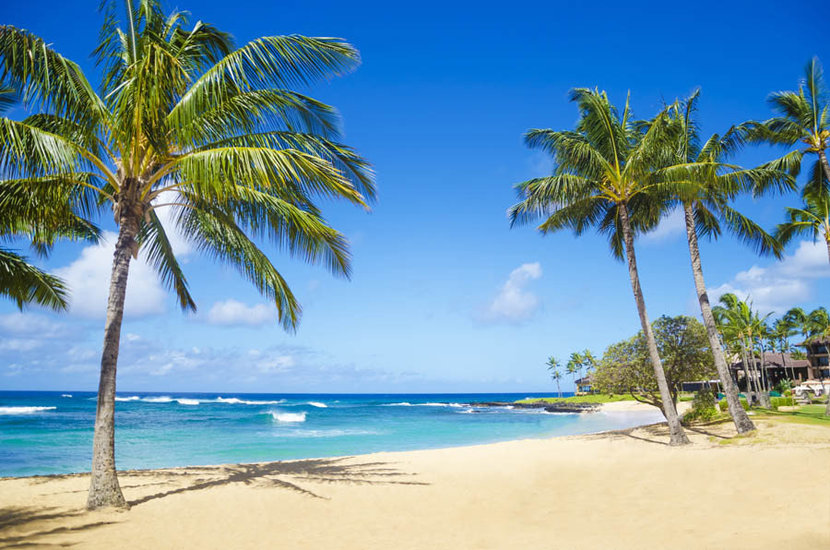 Coconut palm trees in on a beach in Hawaii with a blue ocean and clear sky in the background
